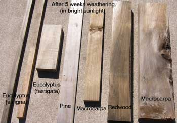 Result after wood has been treated with Eco Wood Treatment (5 weeks)